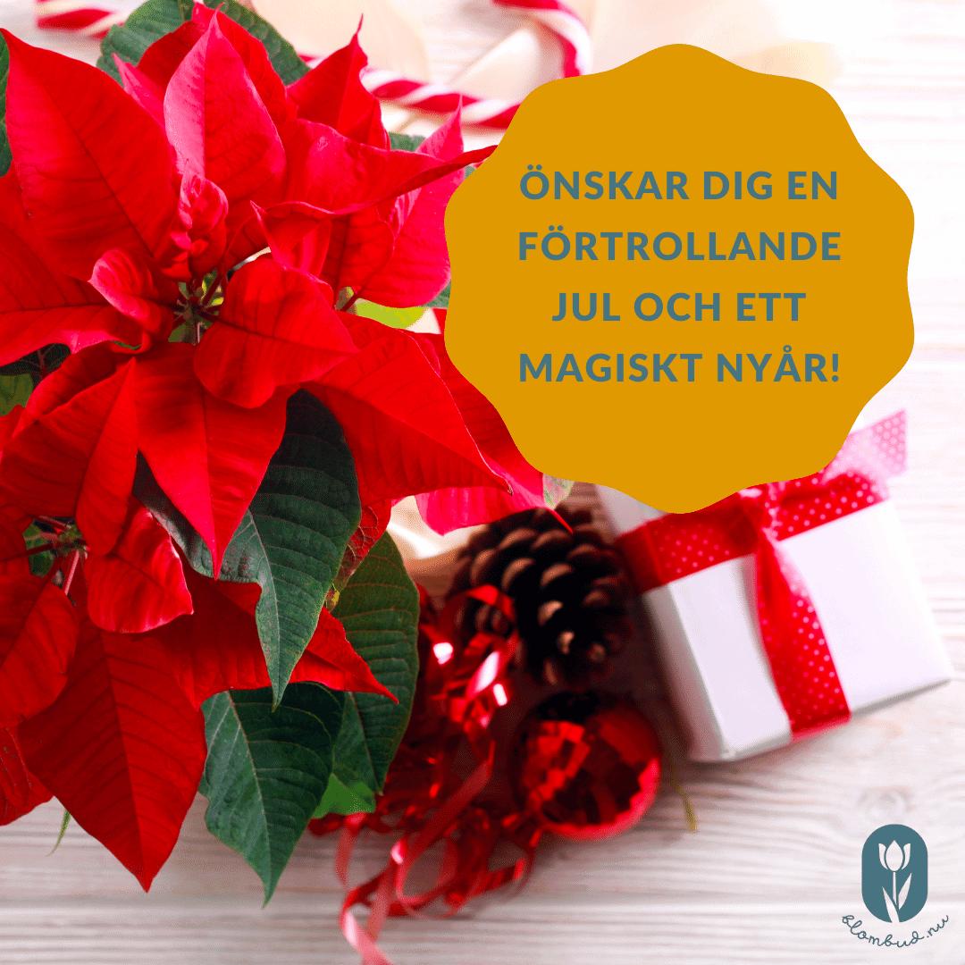 En röd julblomma, en vit julklapp och julhälsningen önskar dig en förtrollande jul och ett magiskt nyår!